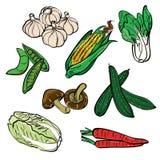 Insieme di colore di verdure illustrazione di stock