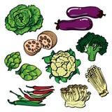 Insieme di colore di verdure illustrazione vettoriale