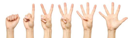 Insieme di conteggio del segno femminile della mano isolato Fotografie Stock
