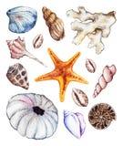 Insieme di corallo del discolo del ammonit della conchiglia dell'ippocampo dell'oceano del mare dell'acquerello Fotografia Stock
