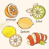 Insieme di doodle dell'agrume illustrazione vettoriale