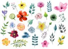 Insieme di elementi floreale dell'acquerello - fiori e foglie Fotografie Stock Libere da Diritti