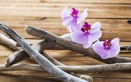 Insieme di elementi naturale per benessere e rilassamento Fotografia Stock Libera da Diritti