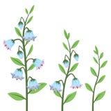 Insieme di elementi di progettazione del fiore di Bluebell di stile del fumetto isolato su bianco Immagini Stock
