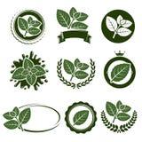 Insieme di etichetta delle foglie di menta Vettore Immagini Stock