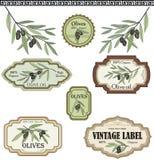 Insieme di etichette verde oliva d'annata. Raccolta disegnata a mano di schizzo di vettore illustrazione di stock