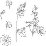Insieme di fiori della malva del disegno a tratteggio Immagine Stock