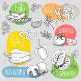 Insieme di gesso attinto un alimento della lavagna, spezie royalty illustrazione gratis