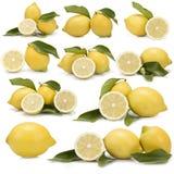 Insieme di grande delle fotografie dei limoni Fotografia Stock Libera da Diritti