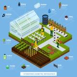 Insieme di Infographic di colture aeroponiche e di coltura idroponica illustrazione vettoriale