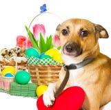 Insieme di Pasqua e del cane Immagini Stock Libere da Diritti