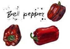 Insieme di peperone dolce rosso Pittura disegnata a mano dell'acquerello di schizzo sul fondo bianco, illustrazione dell'alimento Fotografia Stock Libera da Diritti
