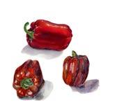 Insieme di peperone dolce rosso Pittura disegnata a mano dell'acquerello sul fondo bianco, illustrazione dell'alimento biologico Fotografia Stock