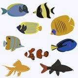 Insieme di progettazione di colore del pesce di mare piana Fotografia Stock