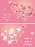 Insieme di schede del fiore di ciliegia Immagine Stock Libera da Diritti