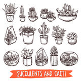 Insieme di schizzo dei cactus e dei succulenti Immagine Stock