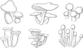 Insieme di schizzo del fungo Fotografia Stock