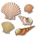 Insieme di Shell Immagini Stock