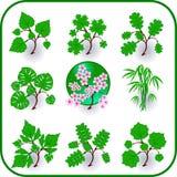 Insieme di simbolo dell'icona degli alberi. Immagini Stock Libere da Diritti
