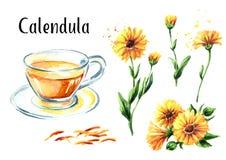 Insieme di tè del tagete della calendula con il cappuccio ed il fiore di vetro Illustrazione disegnata a mano dell'acquerello, is royalty illustrazione gratis