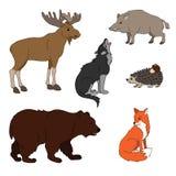 Insieme di vari animali svegli, animali della foresta Lupo, volpe, orso, cinghiale, alce, istrice Illustrazione di vettore isolat Immagine Stock