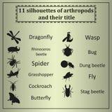 Insieme di vari insetti Immagine Stock Libera da Diritti