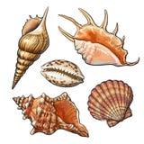 Insieme di varie belle conchiglie del mollusco, illustrazione di vettore illustrazione vettoriale