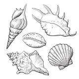 Insieme di varie belle conchiglie del mollusco, illustrazione isolata di vettore royalty illustrazione gratis