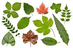 Insieme di varie foglie delle piante: erbe, cespugli ed alberi, herbar Immagini Stock