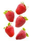 Insieme di varie fragole su fondo bianco Immagine Stock Libera da Diritti