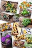 Insieme di varie piante medicinali ed erbe Fotografia Stock Libera da Diritti