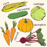 Insieme di verdure del vegetariano illustrazione di stock