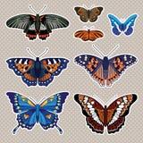 Insieme di vettore con le farfalle isolate Fotografie Stock Libere da Diritti