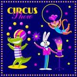 Insieme di vettore degli animali da circo Fotografie Stock Libere da Diritti
