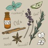 Insieme di vettore degli elementi di aromaterapia Fotografie Stock