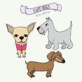 Insieme di vettore dei cani del fumetto - bassotto tedesco, Scottish Terrier e chihuahua su fondo bianco Fotografia Stock