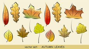 Insieme di vettore dei fogli di autunno Fotografia Stock