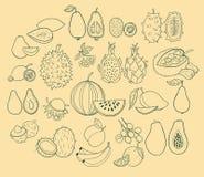 Insieme di vettore dei frutti esotici Fotografia Stock