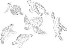 Insieme di vettore del fondo isolato della tartaruga di mare royalty illustrazione gratis