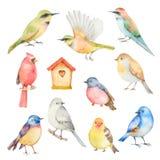 Insieme di vettore dell'acquerello degli uccelli Immagine Stock