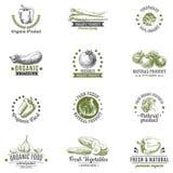 Insieme di vettore delle etichette, del logos e della progettazione disegnata a mano Fotografie Stock