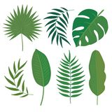 Insieme di vettore delle foglie tropicali Immagini Stock