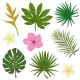 Insieme di vettore delle illustrazioni con le foglie tropicali e illustrazione di stock