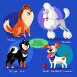Insieme di vettore delle razze dei cani Collie, barboncino, Shiba e Terier svegli Immagine Stock Libera da Diritti