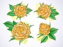 Insieme di vettore delle rose e delle foglie con gli elementi dell'acquerello Fotografia Stock Libera da Diritti