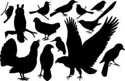 Insieme di vettore delle siluette degli uccelli del terreno boscoso illustrazione vettoriale