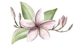 Insieme dipinto a mano del handpaint dell'acquerello degli oggetti Rosa e purpl immagine stock libera da diritti