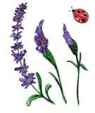 Insieme dipinto a mano dell'acquerello dei fiori della molla illustrazione vettoriale