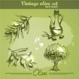 Insieme disegnato a mano d'annata dell'albero e della bottiglia del ramo di ulivo Immagini Stock