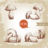 Insieme disegnato a mano del fungo di porcini di stile di schizzo Boletus fresco della foresta edulis Ingrediente di alimento ita illustrazione di stock